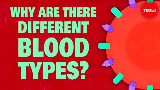 Download Why do blood types matter? - Natalie S. Hodge Video