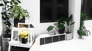 Download My Favourite Indoor Plants [+TIPS] // Rachel Aust Video