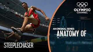 Download Anatomy of a Steeplechaser: How their Physique Helps Their Stamina Video