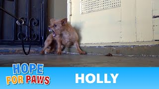 Download Rescuing a terrified abandoned dog - The transformation will amaze you! Please share. Video