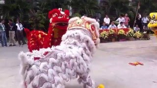 Download cambodia lion dance Video