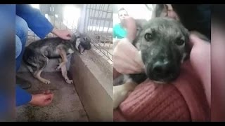Download Abused dog is stroked for the first time [ Must Watch ] Video