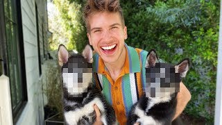 Download We're keeping 2 Puppies! Video