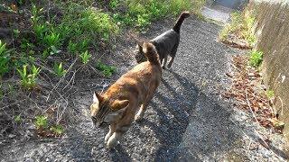 Download 野良猫親子 猫親子の朝ご飯と朝散歩 🌄 Video