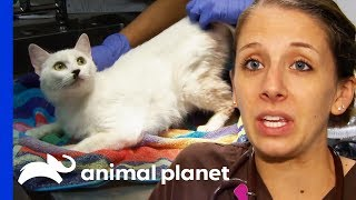 Download 36 Cats And An Elderly Dog Rescued From Hoarding Situation | Animal Cops Houston Video