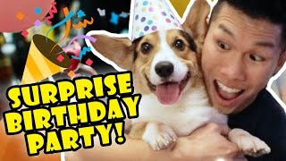 Download Corgis Priceless Reaction to His SURPRISE DOG BIRTHDAY PARTY! Video