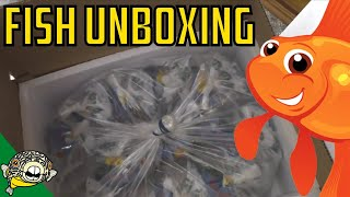 Download Aquarium Fish Unboxing! Bettas, Plecos, Corydoras! Daily Dose #22 Video