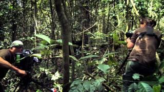 Download Chimpanzee ″Making Of″ Featurette Video