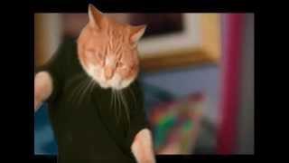 Download It's Catsgiving! Video