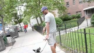 Download Blue Heeler with Severe Dog Aggression - Dog Rehabilitiation - DCTK9 Video