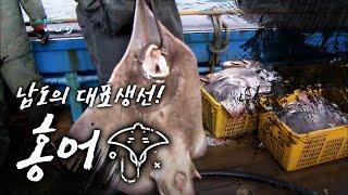 Download 남도의 대표생선 홍어! Raja Skate ray[어영차바다야 특집] Video