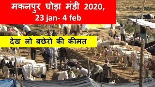 Download Makan Pur Horse Mandi Mela Market - 2020 - Horse Babies For Sale घोड़ा बाजार Video