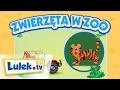 Download Lulek jedzie do ZOO I Rymowanki dla dzieci I Lulek.tv Video