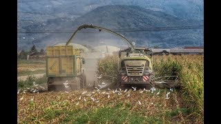 Download Mais silage 2018 Linea Verde Tuscany | Claas jaguar 980 | Video