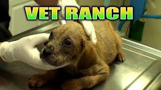 Download Broken Leg Pup and a Mange Pup Video