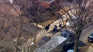 Download NYPD Chases Runaway Cow Through NYC Streets Video