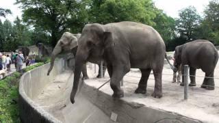 Download Hagenbecks Tierpark Teil 2/3 Juli 2011 Video