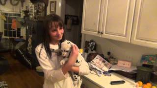 Download BIRTHDAY SURPRISE- DALMATIAN PUPPY Video