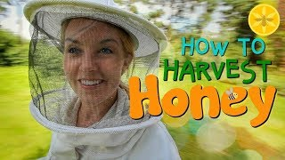 Download How to Harvest Honey! | Beekeeping with Maddie #12 Video