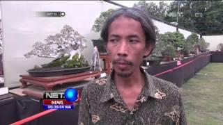 Download Kontes Bonsai dengan Harga 2M - Net24 Video