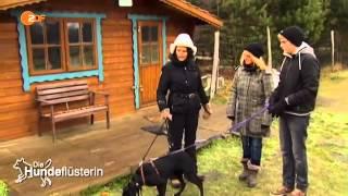 Download Die Hundeflüsterin 2 10 Lana die Zugmaschine HundeWissen Video