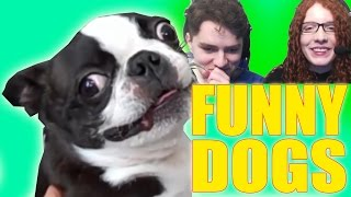 Download TRY NOT TO LAUGH - Funny Dogs Compilation Challenge Video