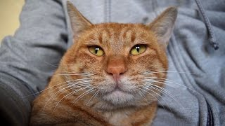 Download 길고양이랑 친해지는 방법 19, 또다른 캣맘 (의문의 여인) Video