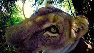 Download EAT. SLEEP. REPEAT. #AskMeg | The Lion Whisperer Video