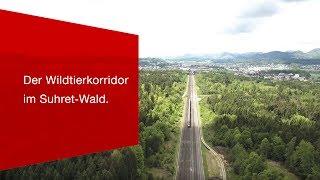 Download Freie Bahn für die Wildtiere – Der Wildtierkorridor im Suhret-Wald. Video