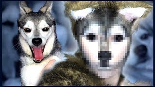 Download I Transformed Myself Into My Dog, Ripley Video