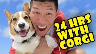 Download MY CORGI QUALITY TIME - SPENDING 24 HRS TOGETHER - Life After College: Ep. 498 Video