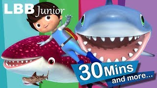 Download Shark Song | And Lots More Original Songs | From LBB Junior! Video