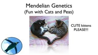 Download Mendelian Genetics - Fun with Cats and Peas Video