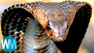 Download Top 10 TERRIFYING Snakes That Will Probably KILL You Video