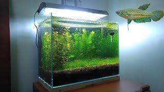 Download 3 Months Update - New Fish (Sparkling Gourami) No filter, No CO2, NO Ferts 5 Gallon Nano Tank Video