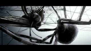 Download Spider vs Butterfly. Video