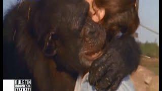 Download Mengharukan! Simpanse peluk wanita yang menyelamatkannya 25 tahun lalu - BIM 10/06 Video