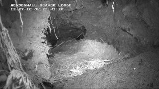 Download Wild Beaver Lodge - Alaska Video