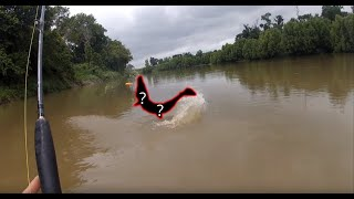 Download Catching A DINOSAUR Alligator Gar From Kayak Video
