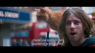 Download Un Gato Callejero Llamado Bob - Trailer Video