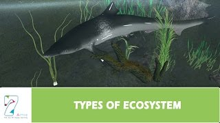 Download TYPES OF ECOSYSTEM Video