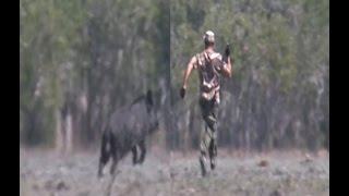 Download Who is faster Man or giant boar? Video
