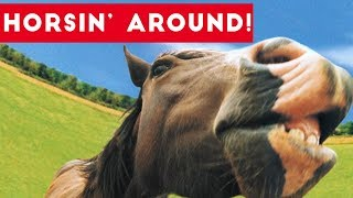 Download Top Funniest Horse Videos of 2017 Weekly Compilation | Funny Pet Videos Video
