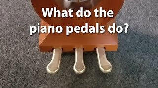 Download What do the pedals on a piano do? | Cunningham Piano Company, Philadelphia, King of Prussia, PA Video