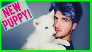 Download NEW PUPPY! Video