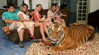 Download Living With Tigers: Family Share Home With Pet Tigers Video