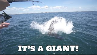 Download It's A GIANT! Video