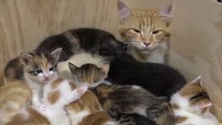 Download 14 Kitten - Aus dem Leben einer Katzenmama Video