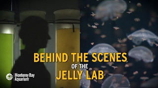 Download Behind The Scenes of the Jelly Lab! Video