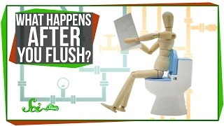 Download What Happens After You Flush? Video